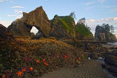 Point of the Arches and Shi Shi Beach, Olympic National Park, Washington State (i8seattle) Tags: ocean park sunset beach point coast washington arch starfish pacificocean national pacificnorthwest olympic olympicnationalpark shi tidepool pacificcoast washingtoncoast thirdbeach secondbeach seastack seastacks olympiccoast shishibeach pointofarches pointofthearches coastpacific beacholympic coastolympic northwestimages northwesternimages andyporterphotography northwesternimagescom washingtonphotography imagesofwashingtonstate picturesofwashingtonstate picturesofthepacificnorthwest imagesofthenorthcascades seastacksunset archesshi