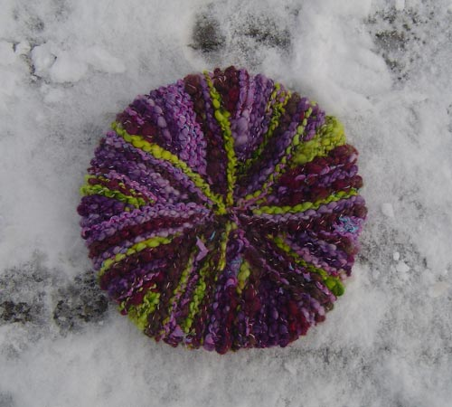 urchin in the snow