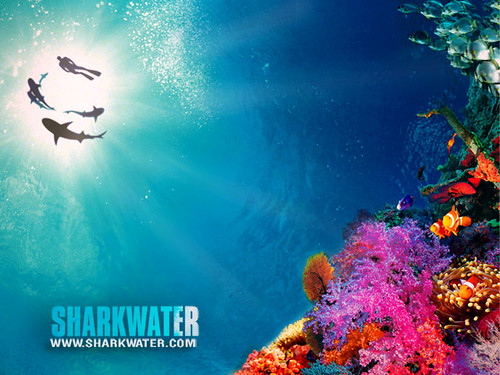 sharkwater_reef_640x480