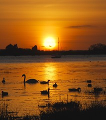 into tomorrow (khanrizzi) Tags: sunset sea beach nature birds geese bosham swan westsussex brent