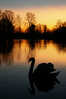 Goodnight my friend (Chris Beesley) Tags: sunset silhouette landscape swan twilight pentax super naturesfinest supershot k100d mywinner karmapotd platinumphoto diamondclassphotographer theunforgettablepictures brillianteyejewel justpentax theperfectphotographer