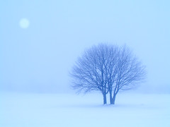 Sisters in the snow (James Jordan) Tags: county door trees winter mist snow fog wisconsin landscape s700 platinumphoto topofthefog impressedbeauty aplusphoto betterthangood