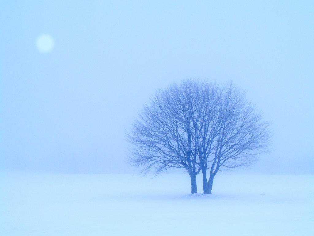 月と雪景色