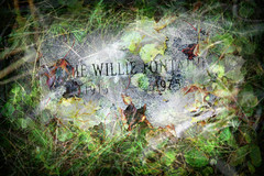 recycle or reincarnate_4074.1 (Mary Bogdan) Tags: life art cemetery grass leaves photography death artist quebec earth decay montreal religion ashes recycle montroyal mountroyal cremation sollang reincarnate marybogdan