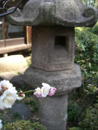 200803009_大田区立池上梅園 005