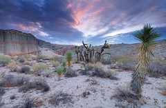 Red Rock Canyon State Park at Sunrise (davidkiene) Tags: california sunrise desert joshuatree redrockcanyonstatepark mojavedesert californiadesert californiastatepark naturesfinest goldstaraward absolutelystunningscapes natureandnothingelse castateparkstnc10