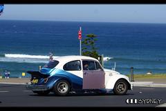 Volkswagen Beatle (celsydney) Tags: auto sun cars beach car bondi volkswagen marcel sand automobile surf sydney australia cel automotive exotic beatle vermeer spotting exotics carspotting marcelvermeer celsydney