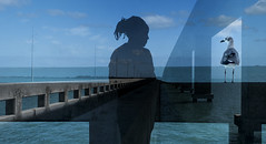 chance encounter on the Florida Keys bridge (marianna_Florida-bound) Tags: florida keys bridge pier girl gull sea water composite incamera psd mariannaarmata sliderssunday
