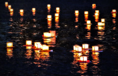 Lantern Floating Hawaii (Amanda Hamilton Photography) Tags: reflection water hawaii oahu magicisland honolulu lantern lanternfloating