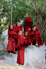 Contemplation, young Monks, Ladakh, India (E. B. Sylvester) Tags: portrait india children kid child culture monk himalaya ladakh inde ebsylvester