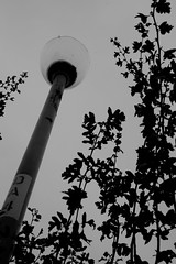lamppost and foliage