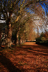 a Carpet of Leaves (torimages) Tags: england unitedkingdom somerset sd allrightsreserved donotusewithoutwrittenconsent copyrighttorimages