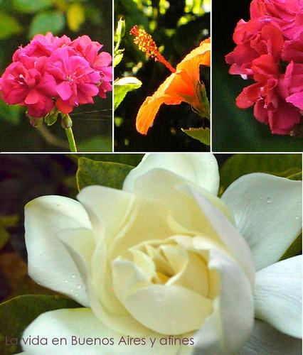 Flores de mi jardin, Flowers in my garden