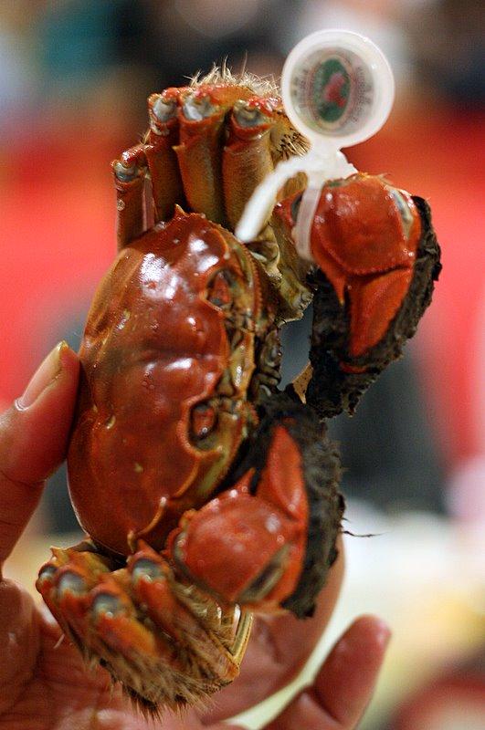 Yang Cheng hairy crab