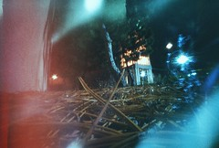 pineneedles (pinhole) (ghostbore) Tags: trees urban night 200iso pinhole pineneedles wormseyeview offbrandfilm