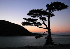 Somes Sound (Ben Kimball) Tags: sunset topf25 fjord iconic acadia mountdesertisland thetree somessound sargentdrive northeastharbor blueribbonwinner passionphotography impressedbeauty