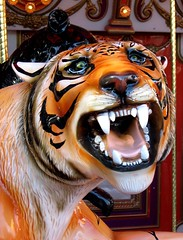 Roar of the Carousel Tiger - Phoenix (moonjazz) Tags: wild favorite orange art phoenix smile face childhood tongue kids wow wonderful fun zoo amusement interesting scary eyes open ride fierce stripes teeth awesome tiger vivid carousel super sharp strong endangered merrygoround soe brilliant bold abigfave anawesomeshot aplusphoto theunforgettablepictures betterthangood thebestpicturegallery brilliant~eyed~jewel
