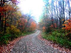 Autumn road in the Moose River Plains (Upstate Dave) Tags: camping scenery adirondacks mooseriverplains adkfavorite