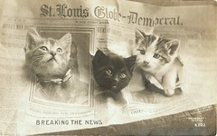 Newsies Mewsies - Breaking the News (Lynn (Gracie's mom)) Tags: cats cat vintage newspaper kitten antique postcard newspapers kittens ephemera gato newsies top20op realphoto cammiangel rotograph clevercreativecaptures