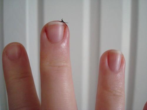 Stitchy 008