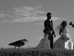 #Explore# Dia branco (DeniSomera) Tags: curitiba jardimbotânico casamento criança casal queroquero robertasá