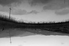 Confusione (Lorenzo Angelini) Tags: grigio creative campagna cielo fabulous acqua palo riflessi biancoenero canne blachandwhite stagno amazingtalent unusualperspectives superbmasterpiece diamondclassphotographer flickrdiamond