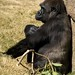 Los Angeles Zoo 087