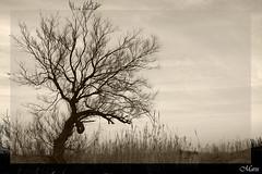 Solitario (raggiodisole23) Tags: trees winter blackandwhite nature sepia albero picturesque