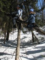 Dead tree climbing