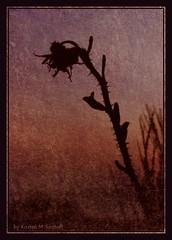 Free (Kirsten M Lentoft) Tags: sunset silhouette hips textured blueribbonwinner artisticexpression anawesomeshot momse2600 superbmasterpiece diamondclassphotographer flickrdiamond eliteimages betterthangood goodnightdearest mmuahhh kirstenmlentoft