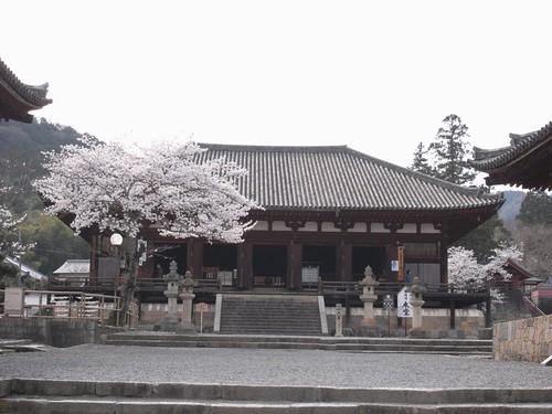 当麻寺(桜)-01
