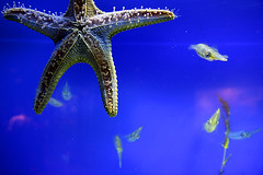 Starfish (Pawel Boguslawski) Tags: china blue fish canon hongkong star aquarium asia 40d