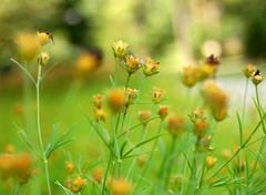 movement se bokeh (Jason Cantrell) Tags: flowers ohio jason blur green blurry weeds bokeh cantrell d40 wilmingtonoh jasoncantrell jascantrell