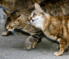 just sympathy? (ChrisK4u) Tags: cats cat canon eos austria is sterreich iso400 innenhof scout krnten carinthia l 5d freehand usm 28l f40 70200mm aristocats canoneos5d 140mm keutschach inneryard freehandshot ef70200mm28lisusm