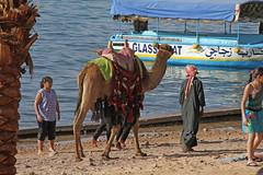 Aqaba (Pandolfo) Tags: redsea middleeast jordan jk aqaba jordania gulfofaqaba giordania hashemitekingdomofjordan orientemedio الأردن pandolfo alurdunn المملكةالأردنيةالهاشمية jaimepandolfo jordaniankingdom almamlakaalurduniyyaalhashemiyya