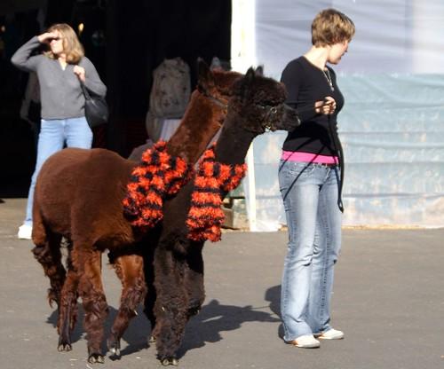 alpaca models