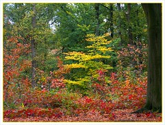 Autumn 2007 (Franc Le Blanc) Tags: autumn fall nature forest herfst nederland noordbrabant rosmalen mywinners abigfave colorphotoaward searchandreward francleblanc naturewatcher