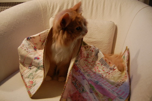 Curious cat Smilla under quilt made by iHanna - Copyright Hanna Andersson