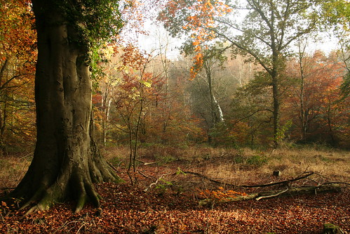 Savernake Forest 32