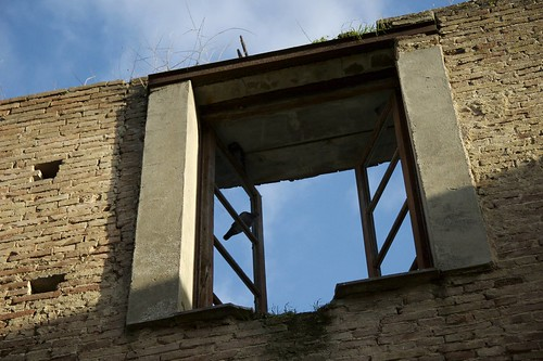 Bird Window