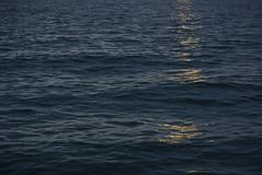 B_DSC_5089_web800 (Grumblehog) Tags: seattle blips blip seasky