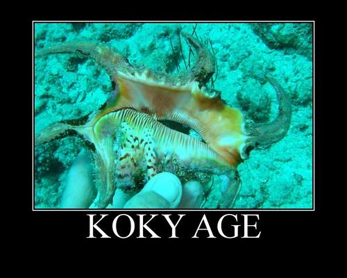 Koky age