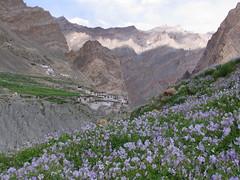 Ladakh India (craigkass) Tags: india mountains trekking hiking zanskar himalaya ladakh theindiatree