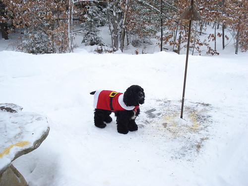 Santa Murph guarding the home