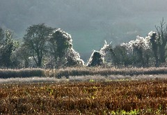 Shining Old Man's Beard. (algo) Tags: wild england photography countryside chilterns clematis algo oldmansbeard seedheads omb naturesfinest mywinners