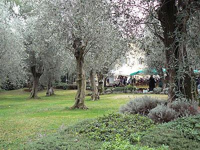 oliviers bastide saint antoine.jpg