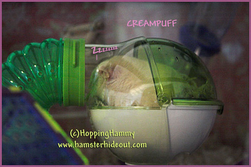 The lucky ham, CreamPuff