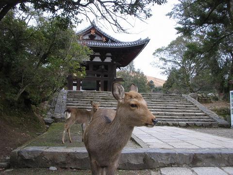 東大寺「猫段の鹿」