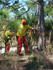DSC00650 (nathan32935) Tags: florida chainsaw firefighting firefighters firetraining stihl wildland brevardcounty wildlandfirefighting bcfr