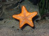 Pla Dao - Star Fish - UnderWater World